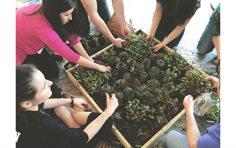 succulent-garden-addthis